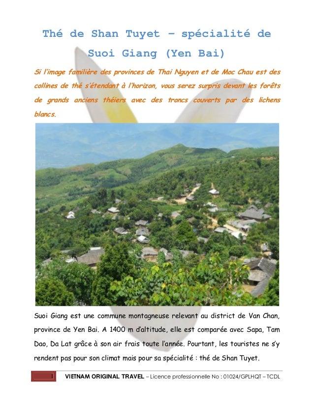 Thé de Shan Tuyet – spécialité de Suoi Giang (Yen Bai) Si l'image familière des provinces de Thai Nguyen et de Moc Chau es...