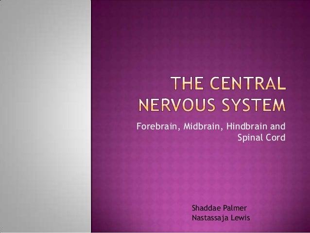 Forebrain, Midbrain, Hindbrain and Spinal Cord  Shaddae Palmer Nastassaja Lewis