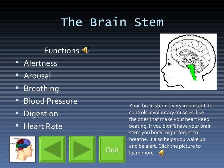 The Brain Stem <ul><li>Functions </li></ul><ul><li>Alertness </li></ul><ul><li>Arousal </li></ul><ul><li>Breathing </li></...
