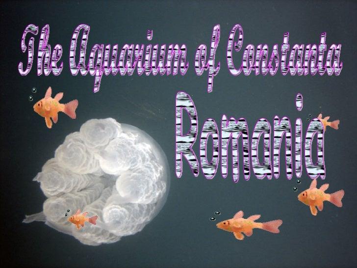 The Aquarium of Constanta Romania