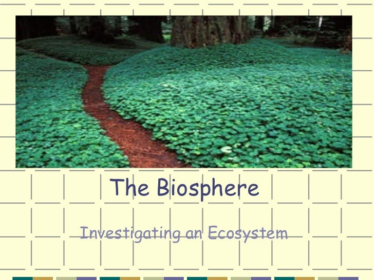 The Biosphere Investigating an Ecosystem