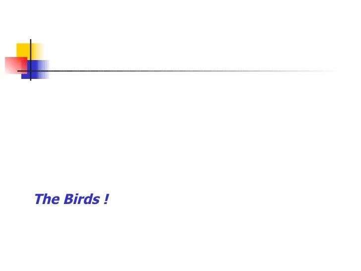 The Birds !