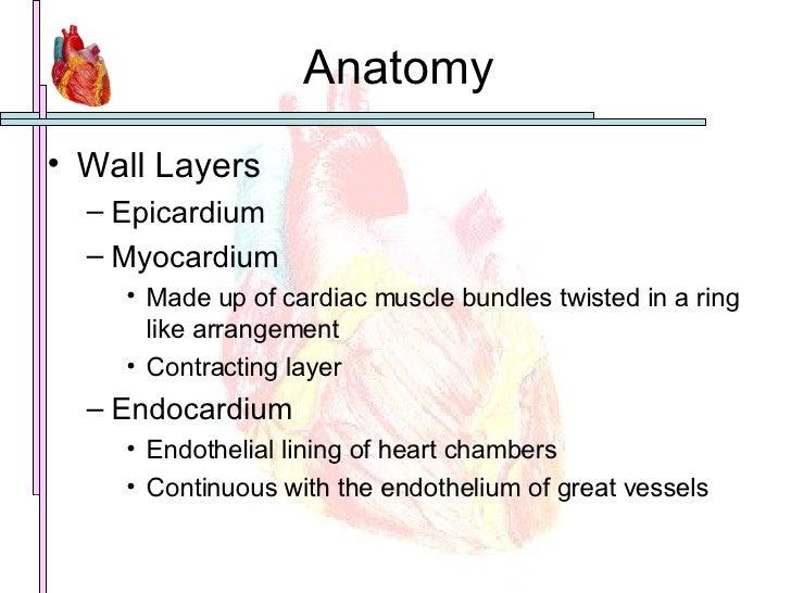 Anatomy <ul><li>Wall Layers </li></ul><ul><ul><li>Epicardium </li></ul></ul><ul><ul><li>Myocardium </li></ul></ul><ul><ul>...