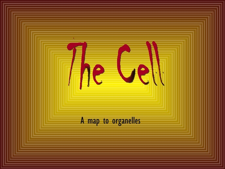 A map to organelles The Cell