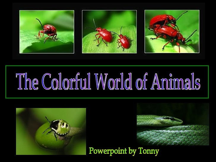 The Colorful World of Animals Powerpoint by Tonny