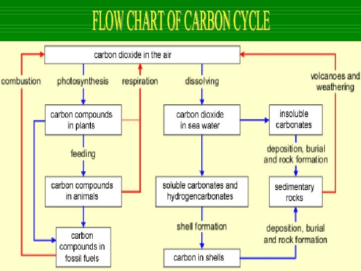 The cycle of life1 the carbon cycle 11 flow chart ccuart Image collections