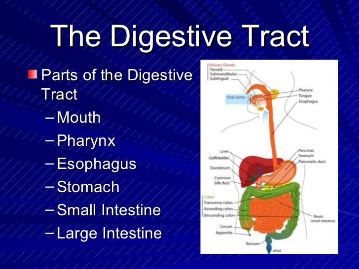 Coolmathgamesus  Sweet The Digestive System Powerpoint With Inspiring How To Change Slide Orientation In Powerpoint  Besides Best Powerpoint Templates Free Furthermore Powerpoint Countdown Clock With Astonishing Images For Powerpoint Also Clipart Powerpoint In Addition Powerpoint Embed Youtube And Powerpoint Topic Ideas As Well As How To Add A Youtube Video To A Powerpoint Additionally Powerpoint Slide Backgrounds From Slidesharenet With Coolmathgamesus  Inspiring The Digestive System Powerpoint With Astonishing How To Change Slide Orientation In Powerpoint  Besides Best Powerpoint Templates Free Furthermore Powerpoint Countdown Clock And Sweet Images For Powerpoint Also Clipart Powerpoint In Addition Powerpoint Embed Youtube From Slidesharenet