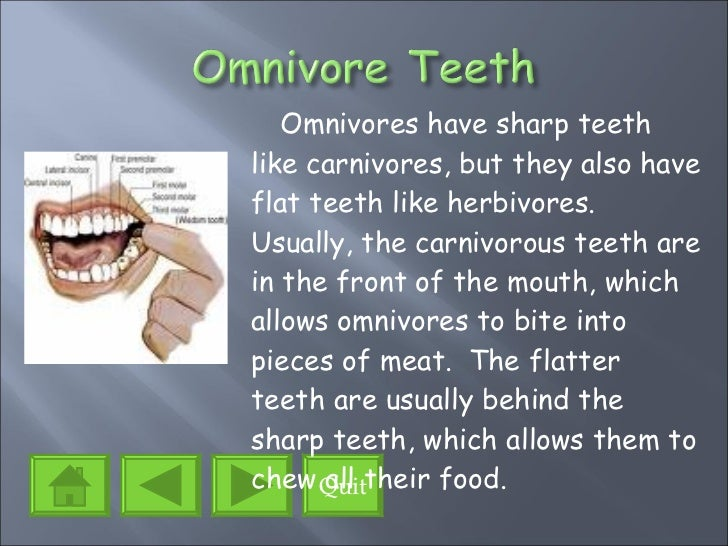 Types Of Food Omnivores Eat