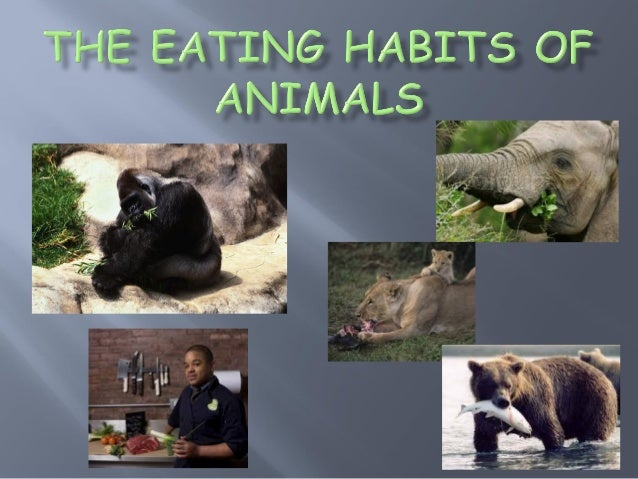 Presentation On Various Ways In Which Animals Eat Their Food