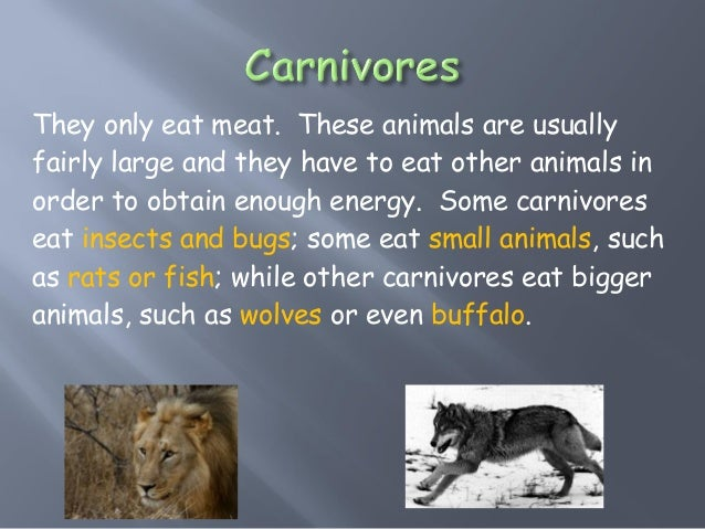 How Animals Get And Eat Their Food