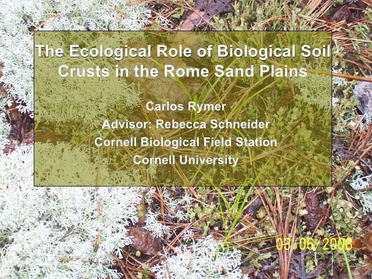 The Ecological Role of Biological Soil Crusts in the Rome Sand Plains Carlos Rymer Advisor: Rebecca Schneider Cornell Biol...