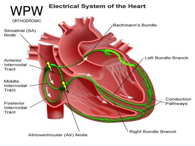 The Electrical Conduction System of the Heart - now with ...