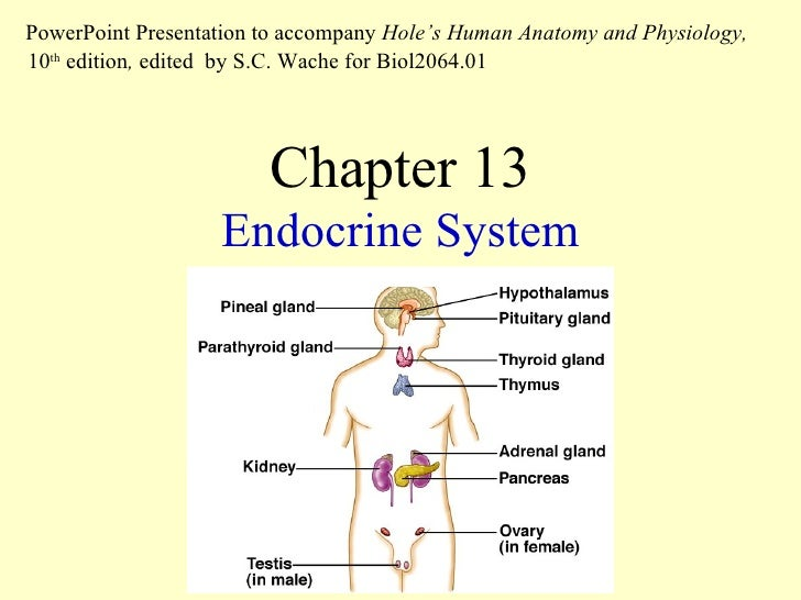 exercise 4 endocrine system physiology activity 2 Free essay: exercise 4: endocrine system physiology: activity 1: metabolism and thyroid hormone lab report pre-lab quiz results you scored 100% by answeringcompare the baseline metabolic rates for the thyroidectomized rat and the mornal rat and explain your results.