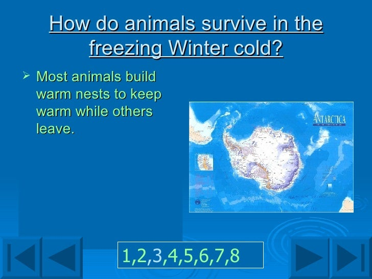 How do animals survive in the freezing Winter cold? <ul><li>Most animals build warm nests to keep warm while others leave....