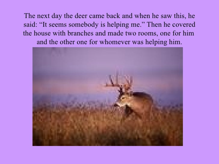 """The next day the deer came back and when he saw this, he said: """"It seems somebody is helping me."""" Then he covered the hous..."""