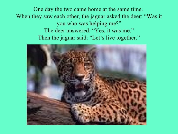 """One day the two came home at the same time.  When they saw each other, the jaguar asked the deer: """"Was it you who was help..."""