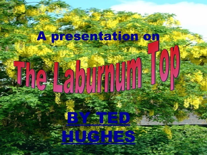 A presentation on BY TED HUGHES The Laburnum Top