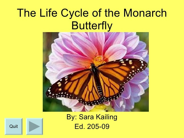 The Life Cycle of the Monarch Butterfly By: Sara Kailing Ed. 205-09 Quit