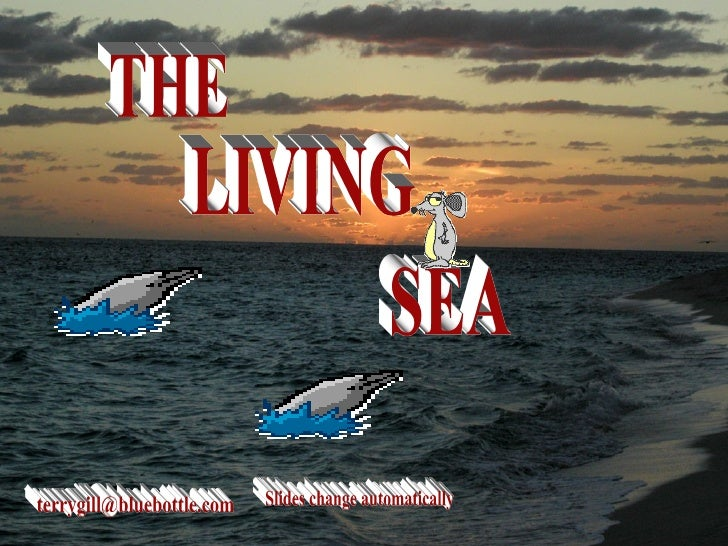 THE LIVING SEA [email_address] Slides change automatically