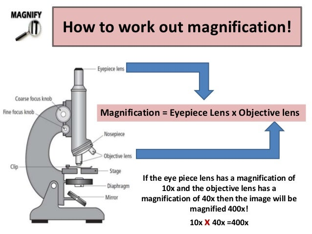 microscope parts and functions pdf