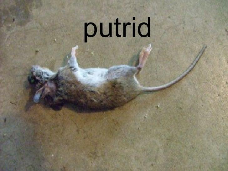 putrid