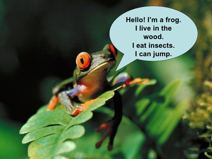 Hello! I'm a frog. I live in the wood. I eat insects. I can jump.