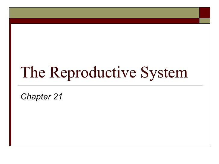 The Reproductive System Chapter 21