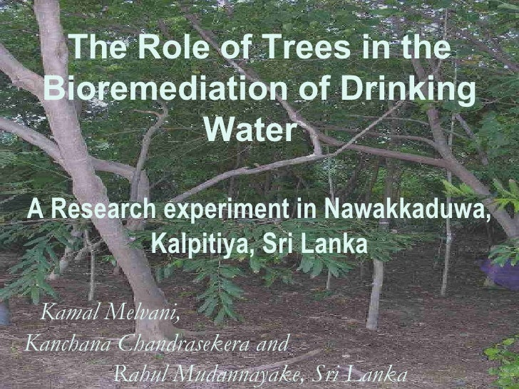 The Role of Trees in the Bioremediation of Drinking Water  A Research experiment in Nawakkaduwa, Kalpitiya, Sri Lanka Kama...