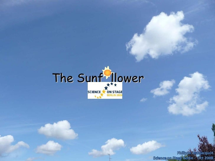 The Sunf  llower