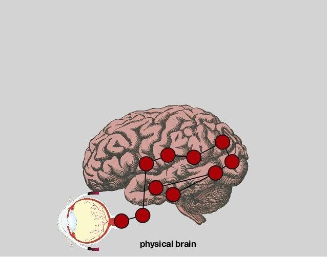 visual cortex — V1 occipital lobe edge detection