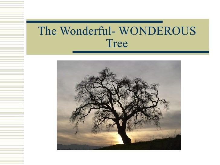 The Wonderful- WONDEROUS Tree