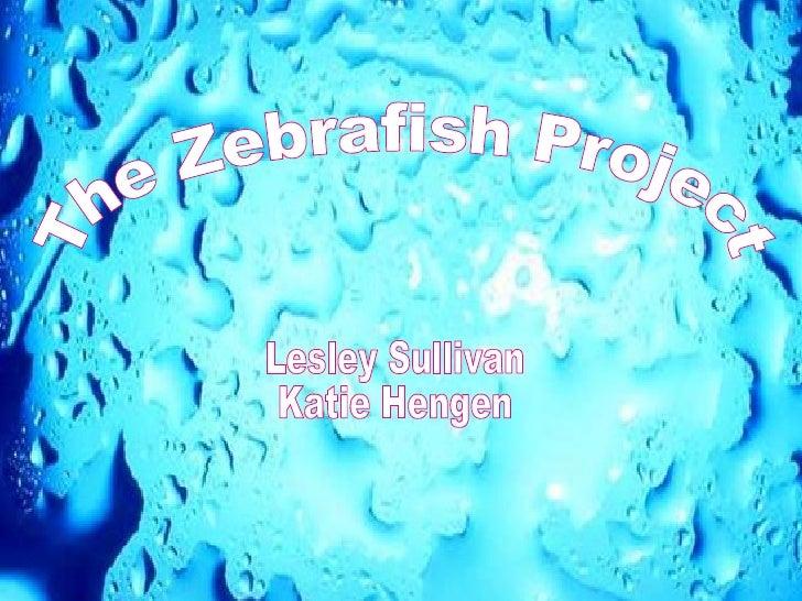 The Zebrafish Project Katie Hengen Lesley Sullivan The Zebrafish Project Lesley Sullivan Katie Hengen