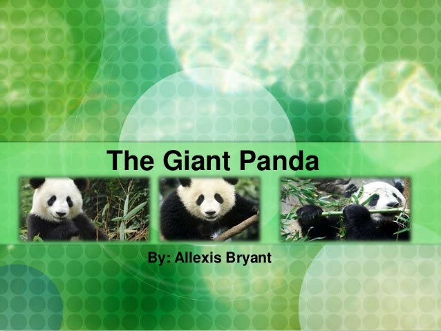 The Giant Panda By: Allexis Bryant