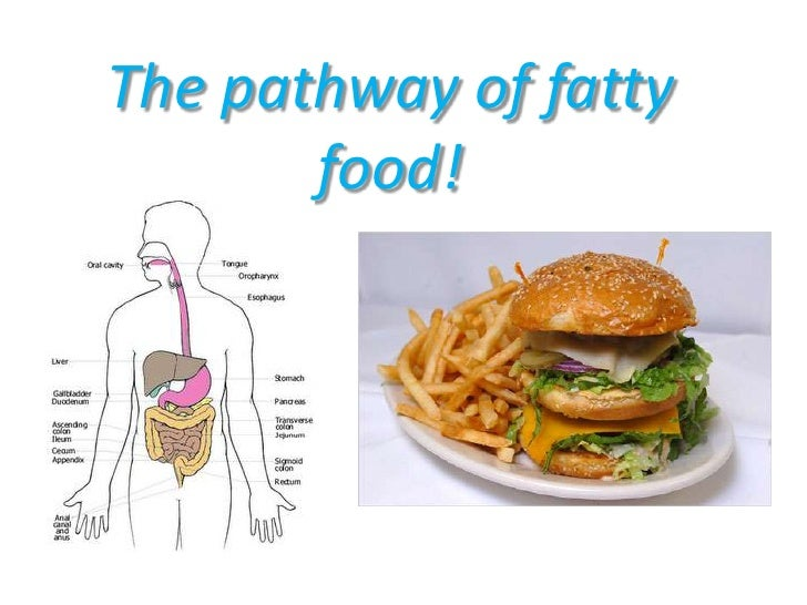 The pathway of fatty food!<br />