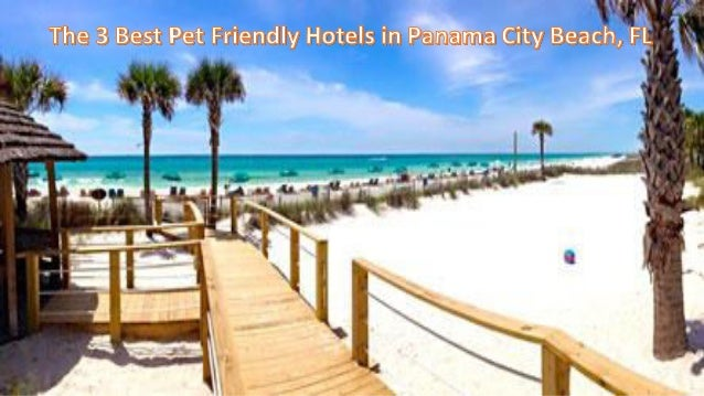 Panama City Beach Hotels >> The 3 Best Pet Friendly Hotels In Panama City Beach Fl
