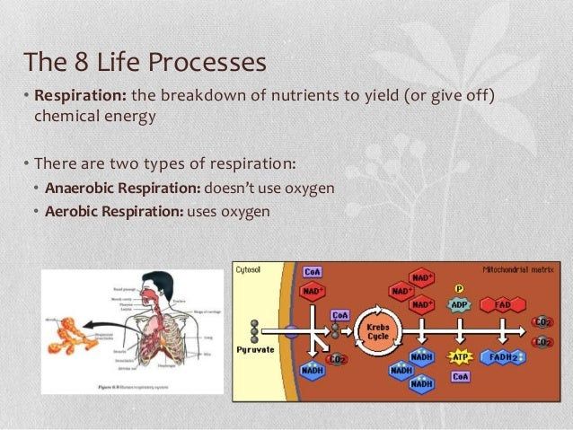 The 8 Life Processes & Homeostasis - Living Environment/Biology
