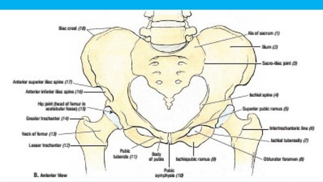 Anatomy of abdomen and pelvis