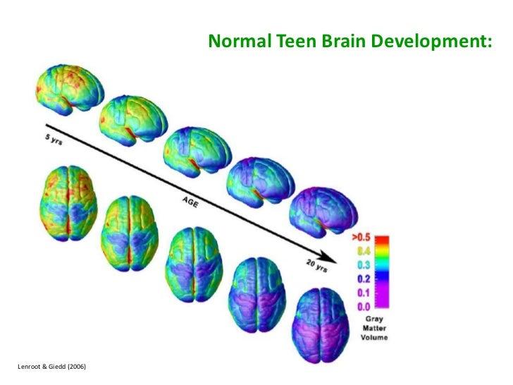 The Heart Of Matter Adolescent Brain >> The Adolescent Brain Some Implication For Educators C