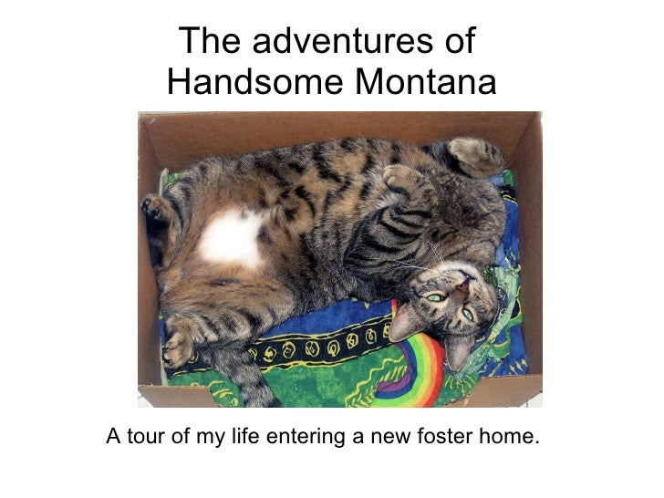 The adventures of  Handsome Montana <ul><li>A tour of my life entering a new foster home.  </li></ul>