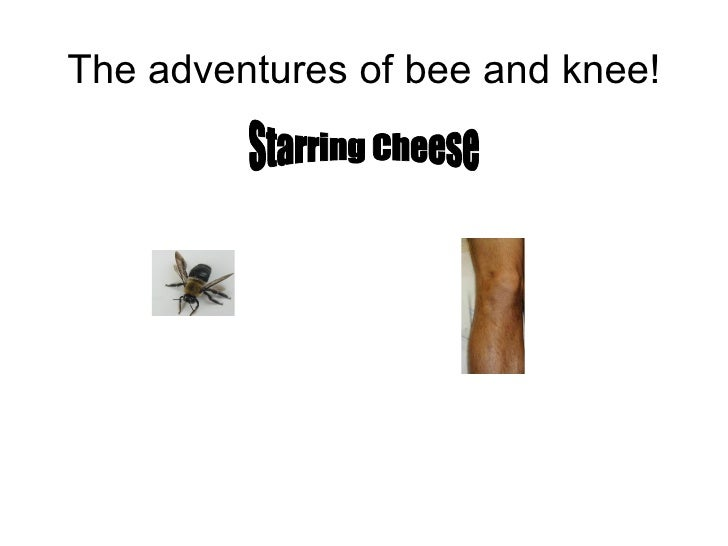 The adventures of bee and knee! Starring Cheese