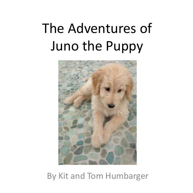 The Adventures of Juno the PuppyBy Kit and Tom Humbarger