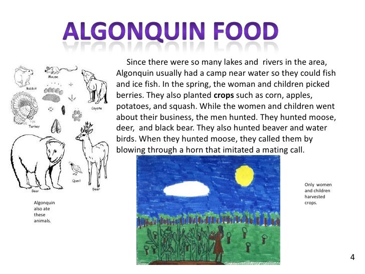 algonquin tribe The algonquin people are native americans who speak the algonquin language and trace their origins to canada, specifically the ottawa river of quebec and ontario algonquin indians also.
