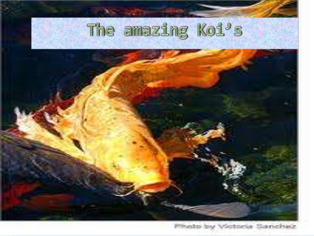 Types of Koi's