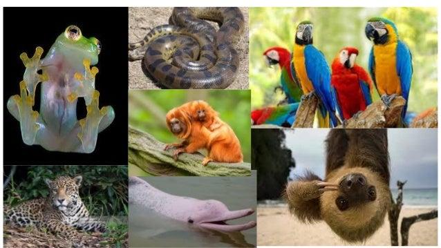 amazon rainforest plants collage. sloth appreciation slide 8 plants of the rainforest amazon collage t
