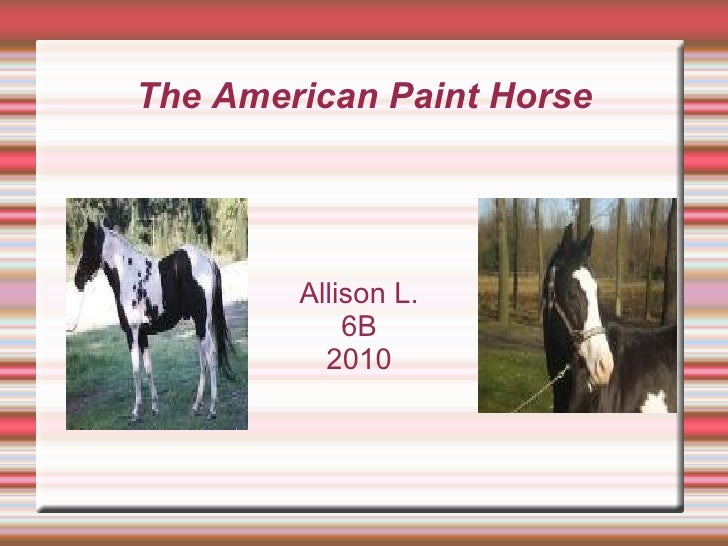 The American Paint Horse Allison L.  6B  2010