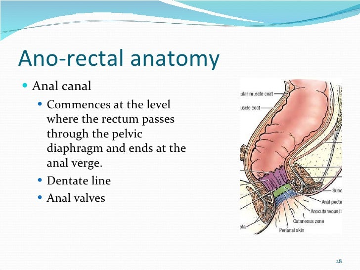 The Anatomy And Physiology Of Normal Anorectum