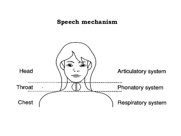 Anatomy of speech production