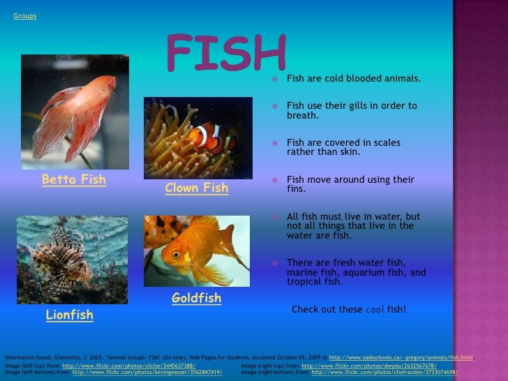 Image of: Osteichthyes Groups Fish Are Cold Blooded Animals Fish Use Their Gills In Order To Breath Fish Are Covered In Scales Rather Than Skin Fishhobbyist The Animal Kingdom
