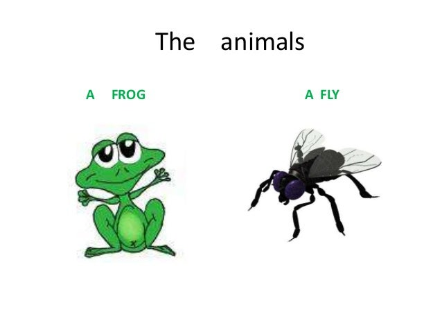 The animalsA   FROG             A FLY