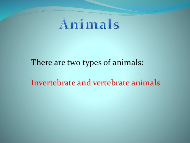 There are two types of animals: Invertebrate and vertebrate animals.